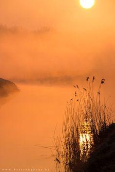 superbnature:  golden morning 11 by bartceuppens