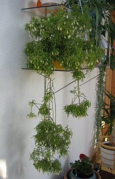 1000 bilder zu h ngepflanzen wohnung auf pinterest kaktus sukkulenten und pflanzen. Black Bedroom Furniture Sets. Home Design Ideas