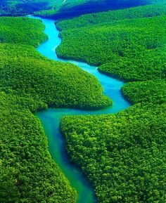 Magical Amazon River and Forest - Brazil…