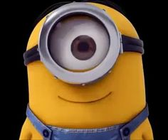 Gif Minion, Amor Minions, Funny Minion Videos, Minion Humour, We Love Minions, Cute Minions, Minion Movie, Best Funny Videos, Minions Quotes