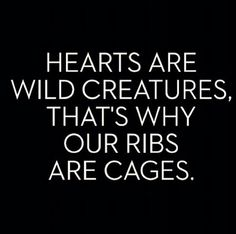 ~ Hearts are wild creatures, that is why are ribs are cages ~  This is a very different quote, never heard it  before.