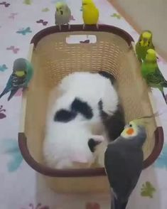Funny Birds, Cute Birds, Funny Cats, Cute Little Animals, Cute Funny Animals, Wallpaper Iphone Neon, Cute Cartoon Wallpapers, Budgies, Funny Animal Pictures