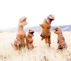 Family T-rex session. Ashley Rae Photography. Dino family. #DinoFamily #TrexFamilySession #2018GotMeLike #TRexCostume #T-Rex #BabyDinos #BestFamilyShootEver #ThinkOutsideTheBox #Lol #FineArtFamilySession #TheFountCollective #Buzzfeed #Rawr #dinomite #familyportrait