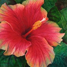 hibiscus paintings - Google Search
