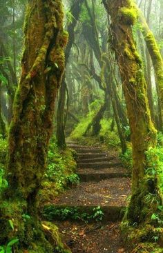 Forest Path, Costa Rica Do you love adventure and nature? Costa Rica is the perfect vacation spot for you. Foto Nature, All Nature, Amazing Nature, Forest Trail, Forest Path, Forest Scenery, State Forest, Deep Forest, Forest Fairy