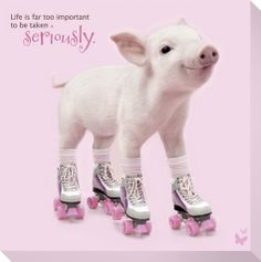 In The Pink! - Roller Skating Pig I don't know if this should be on Derby Dancing or Adorable Animals either way it's my FAV!!!!