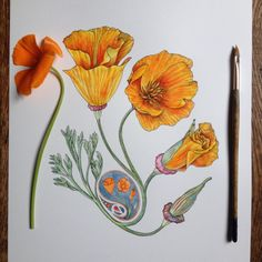 Plant Illustration, Botanical Illustration, Plant Sketches, Flower Sketches, Mediums Of Art, Digital Art Tutorial, Color Pencil Art, Pastel Art, Botanical Art