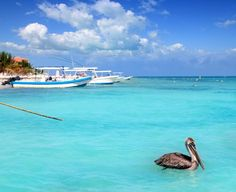 A quaint beach town located just 20 minutes from #Cancun, Puerto Morelos marks the beginning of the #RivieraMaya.  It is known for its calm blue ocean waters and fine white sand beaches.