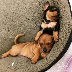 From @blaabbo: How I feel right now  (these two will be available for adoption in a month keep your eye on our website) #cutepetclub [source: http://ift.tt/2foYHGH ]