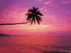 pink sunset and a palm tree