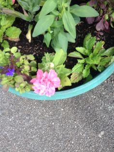 Starting of a flower pot