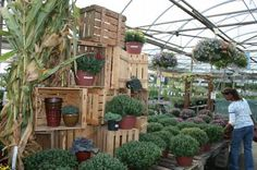 Idea, Tulip Crates, Garden center ideas, Materials, Flowerland Tulip Crates, Crates