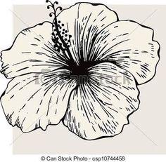Resultado de imagem para flor de hibisco desenhos