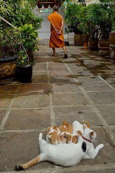 """"""" le chat photographe """""""