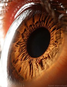 beautiful view of the iris and cornea at the same time