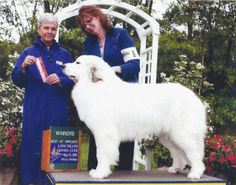 Great Pyrenees - Gracie