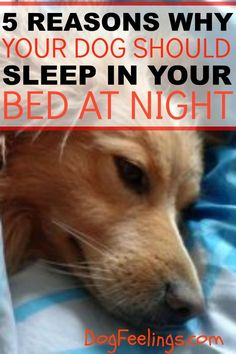 love this!!... 5 Reasons Why Your Dog Should Sleep In Your Bed At Night. https://dogfeelings.com/why-your-dog-should-sleep-in-your-bed/