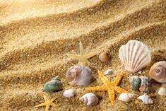 yomna: we can get some shells from the beach for decorations