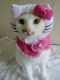 missy needs this costume