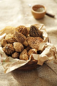 Morels by Studer T.V. on flickr