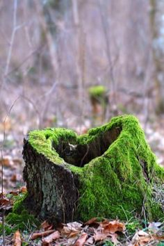 Old tree stump in the woods that has a heart . Not to mention the pretty green moss growing on it.