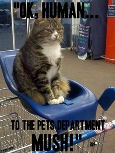 THE BEST CAT PAGE, FACEBOOK  https://www.facebook.com/pages/The-Best-Cat-Page/994713583879307?ref=hl