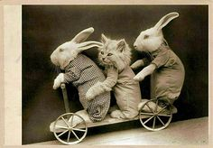 Adorable, cute, funny photos and videos of kitty cats and kittens Clip Art Vintage, Vintage Circus, Funny Vintage Pictures, Vintage Photos, Funny Animals, Cute Animals, Wild Animals, Mundo Animal, Vintage Humor