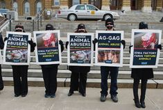 Stop Silencing Animal Welfare Advocates With 'Ag-Gag' Law – ForceChange