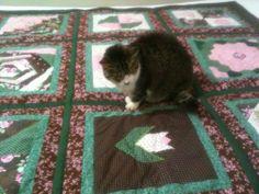 Minha gatinha Filomena curtiu o panô!