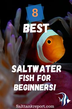 Check out our list of 8 best fish for saltwater tanks! #saltwaterfish #saltwatertanks #saltwatertanksforbeginners Saltwater Fish Tanks, Saltwater Aquarium, Fishing For Beginners, Nano Tank, Salt Water Fish, Two Fish, Little Fish, Angel Fish, Beautiful Fish