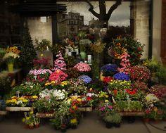 Flower shop 21 flower shop pinterest flower shops flower 7mu9qubdsnu7hnmsttjpjkxfx17ns8mfx7pwkueutlhfrh3w5dfm11mstti2 qq8mm2l3wage8koeshod7vf71mejl1kgkn7cgns5mg0k4tlyw428 h343 nc 428343 mightylinksfo