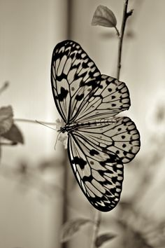 31+ Inspirational Butterfly Portrait | Great Inspire