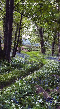 The pretty walk home in Plymouth, Devon, England (bluebells and wild garlic) - photo by Hazel Mansell-Greenwood Beautiful World, Beautiful Gardens, Beautiful Places, Beautiful Pictures, Beautiful Forest, Simply Beautiful, Woodland Garden, Forest Garden, Woodland Flowers