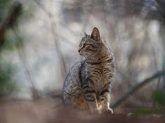 Street cat 128