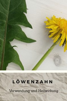 Löwenzahn5 Taraxacum Officinale, Plant Leaves, Plants, Healthy Nutrition, Herbal Medicine, Medicinal Plants, Feel Better, Remedies, Knowledge