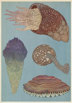 Drawings by Katie Scott - Vintage biology / science / marine life illustrations - Graphic design clip art