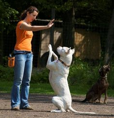 The Mirror Method, the celebrated Hungarian approach to dog training that has amazed Europe, is coming to the USA.