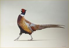 'A Country Gentleman'- Pheasant Painting