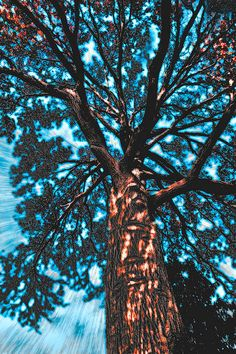 'My Favorite Tree' print by Kellice Swaggerty