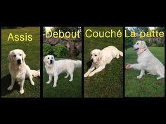 J'éduque mon chien - dressage canin - YouTube