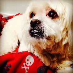 Boa noite! #dog #dogs #cão #cachorro