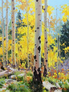 Aspens In Golden Light by Gary Kim