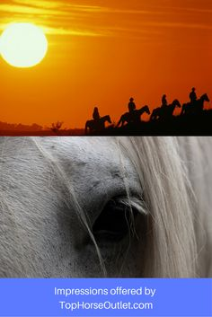 Impressions offered by http://tophorseoutlet.com Just because we love horses