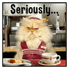 Diner waitress from Seriously Funny Cards Funny Animal Pictures, Funny Animals, Cute Animals, Baby Animals, Crazy Cat Lady, Crazy Cats, I Love Cats, Cool Cats, Catsu The Cat