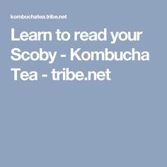 Learn to read your Scoby - Kombucha Tea - tribe.net Kombucha Flavors, Kombucha Recipe, Probiotic Drinks, Scoby Hotel, Kombucha Benefits, Coffee Kombucha, Kombucha How To Make, Fermented Foods, Learn To Read