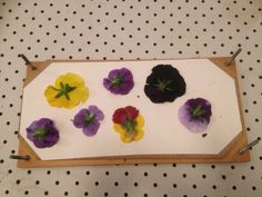 Montessori Inspired Flower Pressing for children. You can make bookmarks for Christmas gifts!