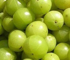 12 Sementes Da Fruta Groselha Da Índia ( Amla ) - R$ 18,00