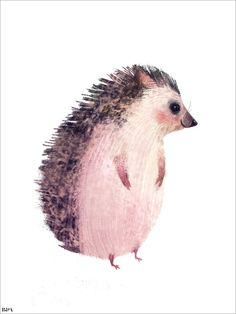 Morning Mr Hedgehog