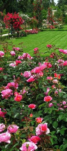 Téa Tosh English Rose Garden #englishgardens