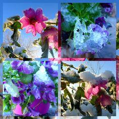 tuin week 5